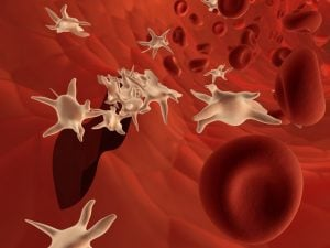 red blood cells and platelets